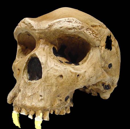 better-skull.jpg?w=1000