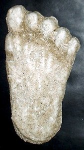 CAST of Bigfoot print found near Roseburg Ore.