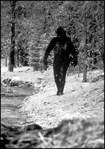 MISTAKEN IDENTITY? Could the Bigfoot in this famous photo really be merely a werewolf?