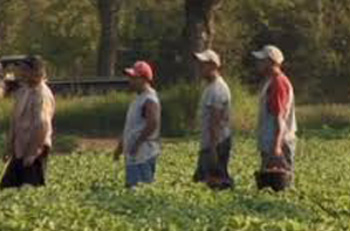 ZOMBIE farm labor is expected to outpace migrant labor by 2019.