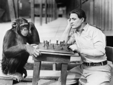 chimpanzee-chess