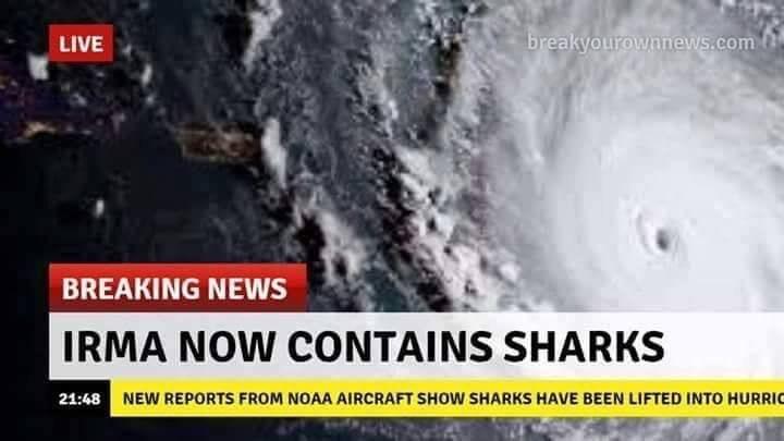 Irma sharks